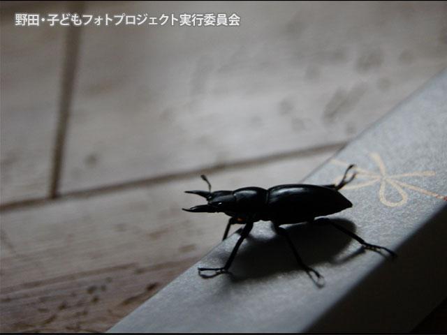 野田・子どもフォトプロジェクトn01 画像
